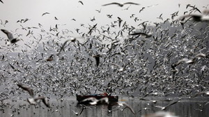 Migratory birds in India (ANSA)